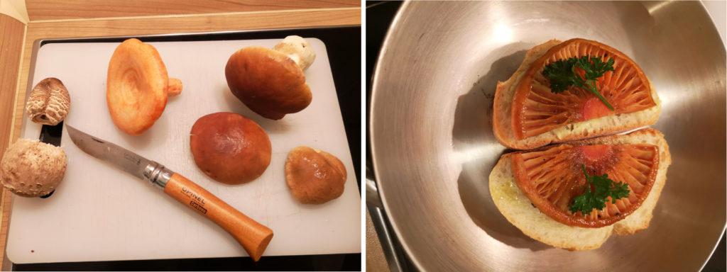 Tips für die Zubereitung und köstliche Pilzrezepte werden bei den Pilzwanderungen gerne ausgetauscht.